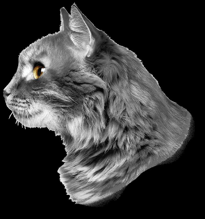 Cat Head Profile